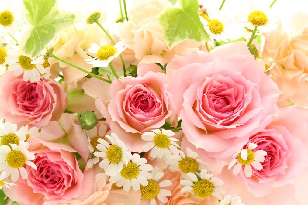 実は難しくない「バラ」の育て方。正しい植え方やお手入れのやり方