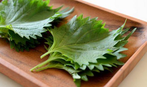 6月頃から収穫できる!栄養豊富な夏野菜「大葉」の栽培方法