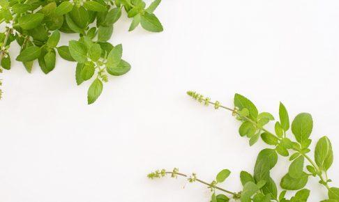冬も緑に囲まれたい!寒さに負けない耐寒性のある10の観葉植物
