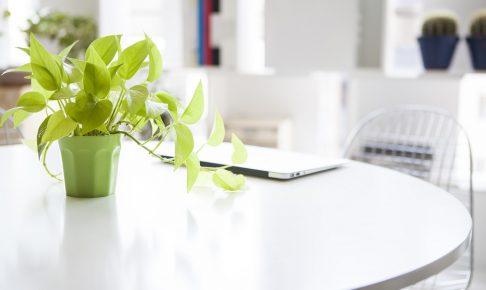 オフィスが見違える!会社に観葉植物を置く4のメリットと選び方