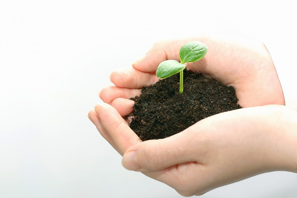 一度植えれば3年は収穫可能なお手軽野菜「ミョウガ」の育て方