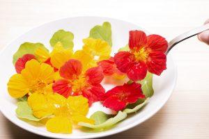 料理に花を咲かせる「エディブルフラワー(食用花)」の栽培方法