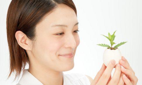 食虫植物のミステリアスな姿を楽しむ!主な種類とそれぞれの育て方
