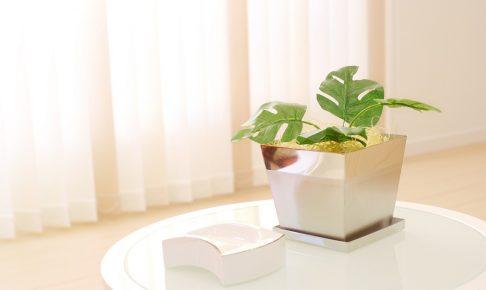 日当たり悪くてもへっちゃら!日陰でも栽培できる観葉植物10選