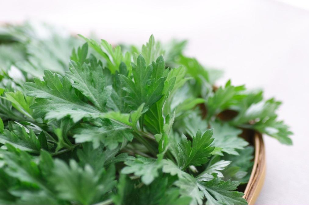 マルチに使えるハーブの女王、「ヨモギ」のお手軽栽培方法