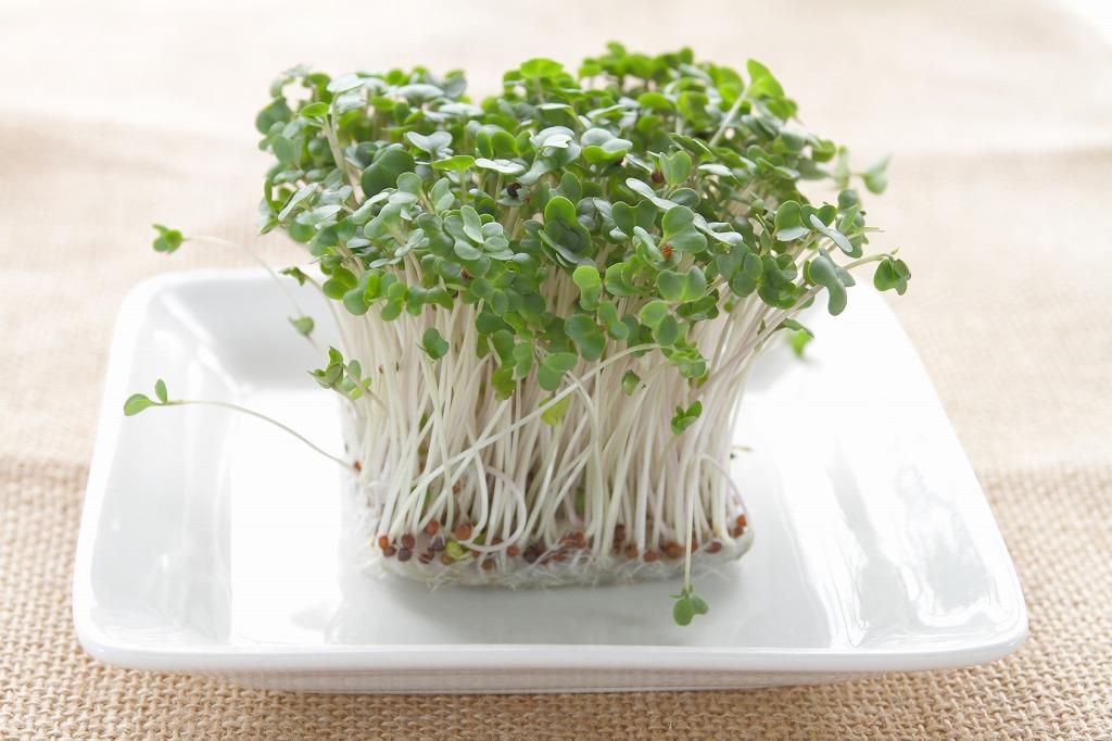 収穫まで1週間!栄養満点「ブロッコリースプラウト」の育て方
