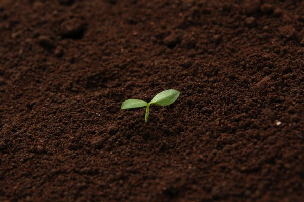 葉ネギの育て方と収穫方法