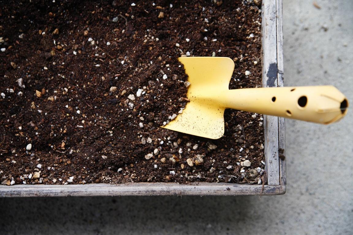 アボカドの育て方と収穫方法