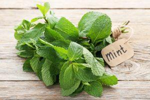 爽やかな香りが魅力の「スペアミント」が持つ効能と育て方