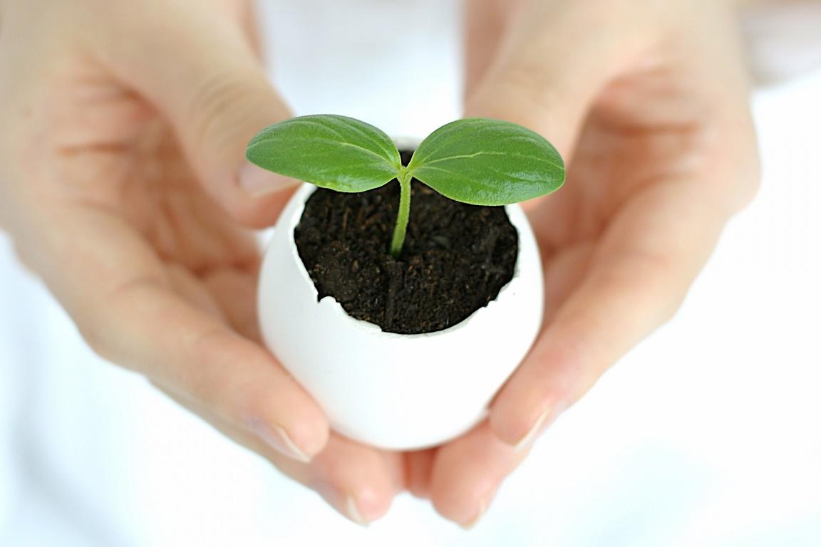 庭がなくても大丈夫!ベランダでできるミニトマトの育て方