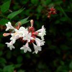 7月に植えるのにおすすめの花 10選