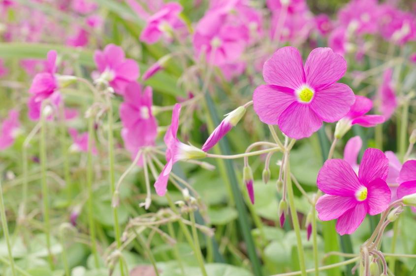 12月に植えるのにおすすめの花 10選