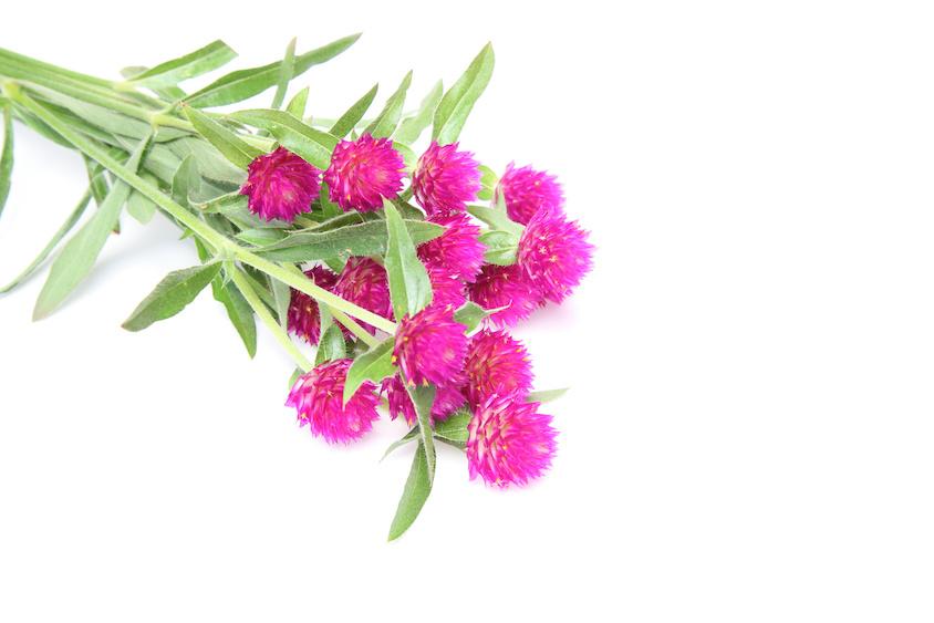 10月に植えるのにおすすめの花 10選