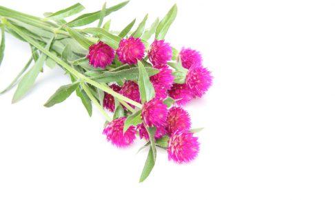 8月に植えるのにおすすめの花 10選